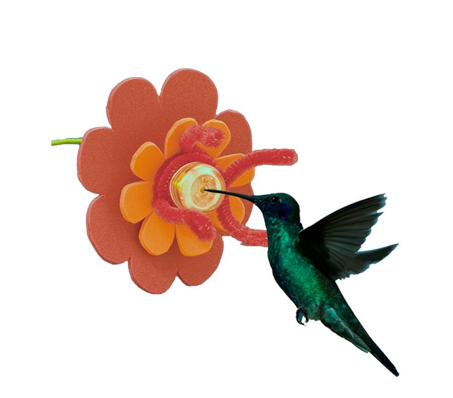 Dr. JB's Hummingbird Productos